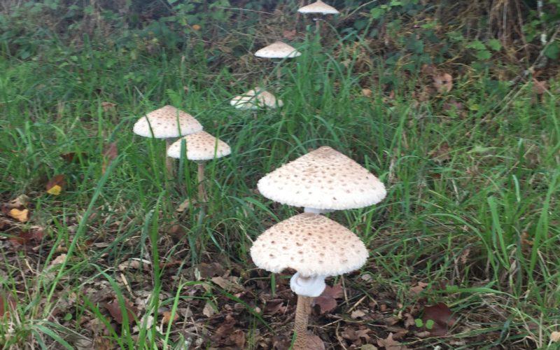 Vive les champignons !